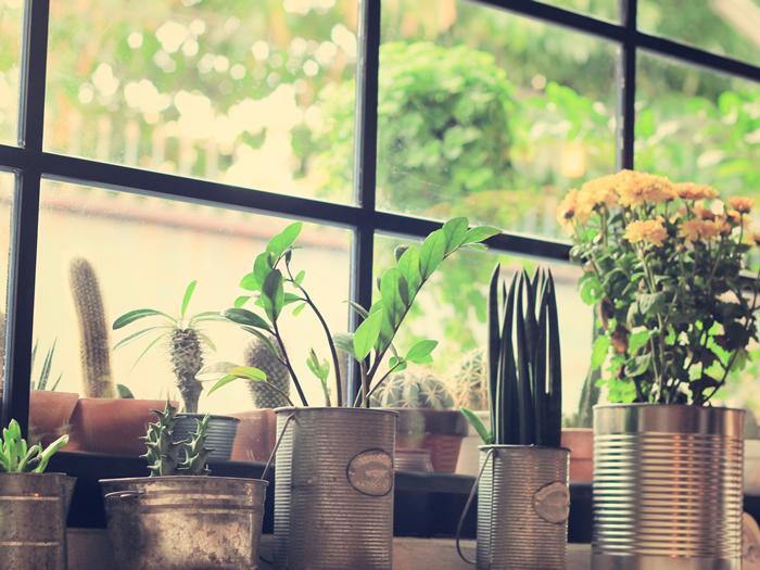 décorer les plantes d'intérieur