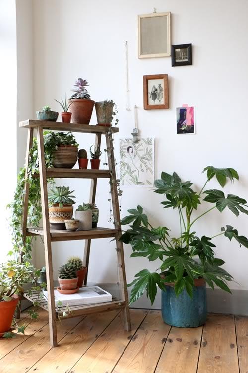 Idées pour décorer avec des plantes: échelle pour mettre des pots