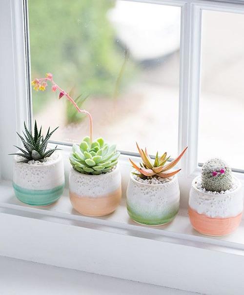 Idées pour décorer avec des plantes: rebord de fenêtre avec cactus