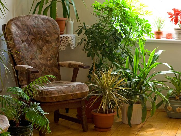 coins-plantes-maison