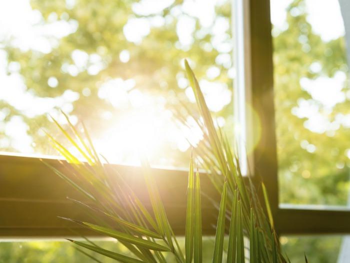 Décoration de printemps, garder les fenêtres propres