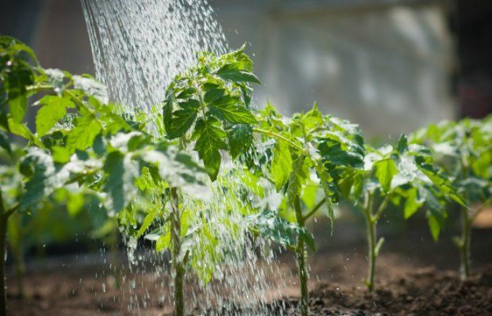Jardinage-Irrigation.jpg