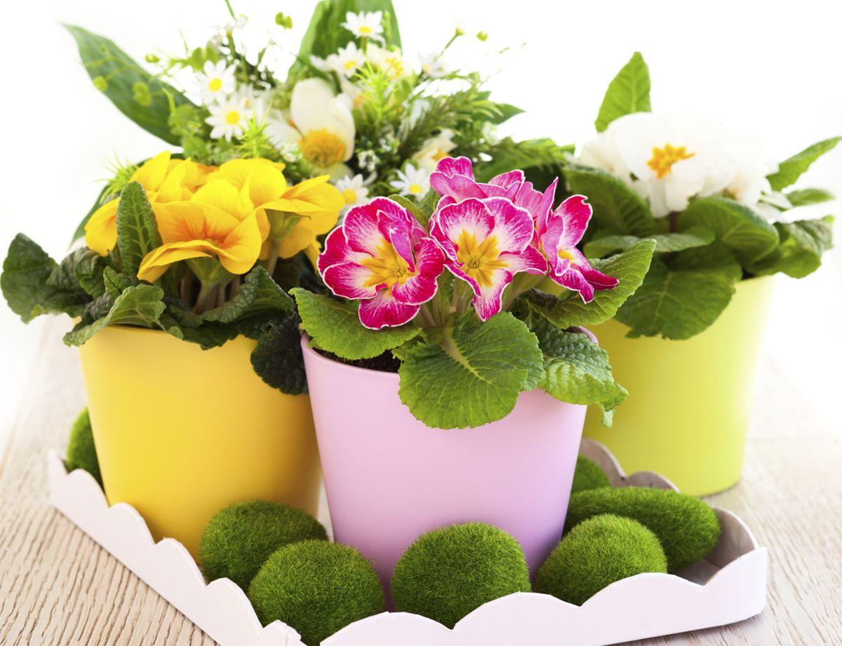 Décoration de printemps