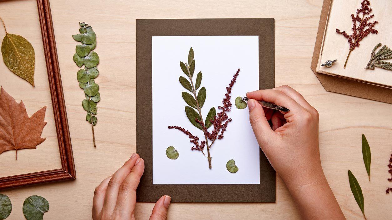 Faire des photos avec des fleurs et des feuilles séchées