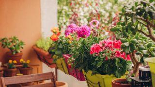 Plantes pour décorer un petit balcon
