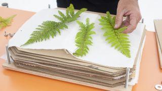 Profitez des feuilles sèches