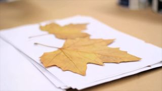 Peindre et décorer les feuilles séchées - Étape 1