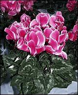 Conseils pour acheter des plantes d'intérieur