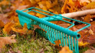 Cueillez les feuilles à l'automne