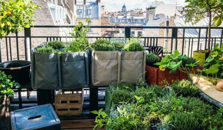 comment-faire-un-jardin-sur-la-terrasse-partie-1