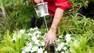 Balises solaires de jardin