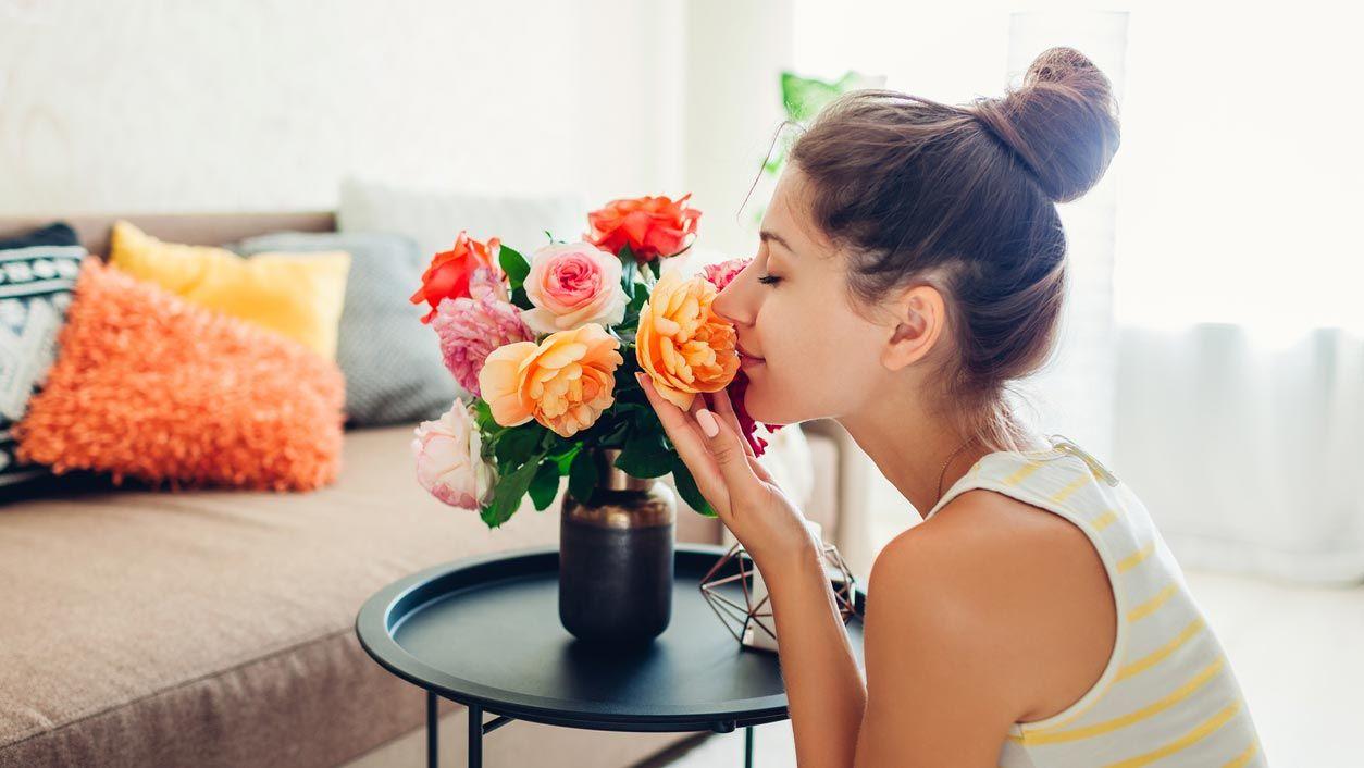 Plantes, fleurs et coussins pour décorer une petite pièce